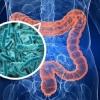 Микрофлора кишечника способствует работе мозга