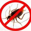 Профессиональное выведение тараканов