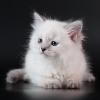 Котята с берегов Невы