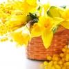 8 Марта - один из первых весенних  праздников, в который  женщины расцветают