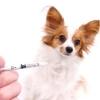 Как лечить парвовирусный энтрит у собак?