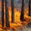 Школьники помогут в борьбе с лесными пожарами