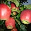 Большой источник витаминов на приусадебном участке