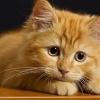 Вопрос от ЗООшеф: чем вы кормите свою кошку?