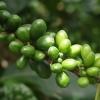 Немного о Зеленом Кофе