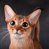 Современные методики стерилизации кошек