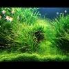 Какой аквариум нужен золотой рыбке