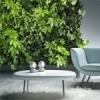 Фитостены - оригинальный способ озеленения квартиры