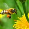 Пчелы, как их покупать