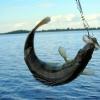 Рыбалка - отдых для всей семьи