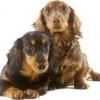 Переломы у домашних животных
