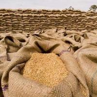 Омских аграриев приглашают на семинар по экспорту пшеницы в Китай