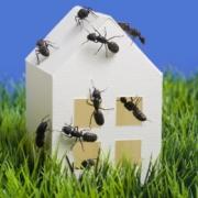 Борьба с синантропными насекомыми