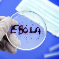 В России начнут испытывать препарат от Эболы на людях