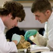 В медвузах страны появится курс трансплантологии