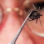 Омичи госпитализированы с подозрением на клещевые инфекции