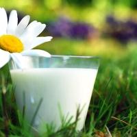 В магазинах Омска появится козье молоко местного производства
