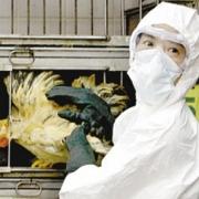 Омичей предупредили о птичьем гриппе