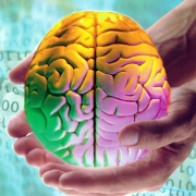 Американские учёные нашли ген интеллекта