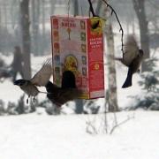 Омские школьники устанавливают кормушки для птиц