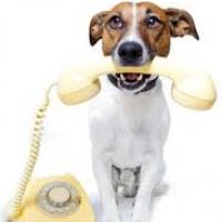Ветеринар у вас дома