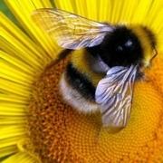 Пчелиный мед. Часть 1: чем он полезен и как им лечиться?