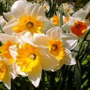 Справиться с депрессией помогут цветы