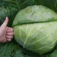 Стали известны продукты, которые помогут защититься от рака