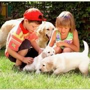 На развитие астмы у детей могут повлиять собаки