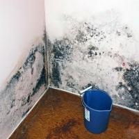 Что делать, если в квартире завелась плесень?