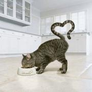 Диетическое питание для кошек в зоомагазине «ЗООшеф»