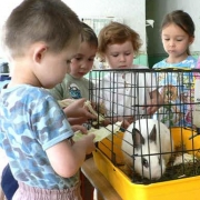 В Омске появился кабинет зоотерапии