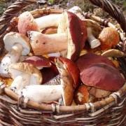Омичам советуют быть внимательными к грибам
