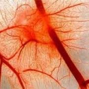 Улучшение кровообращения, борьба с нарушением кровообращения