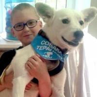 В Омске открывается центр с лечебными собаками