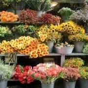 Свежие цветы как залог успеха в цветочном бизнесе