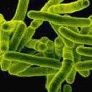 В Омске обнаружена новая форма туберкулеза