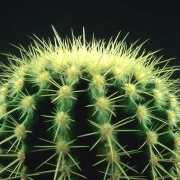 Омские студенты посвятят стихи Зелёному кактусу