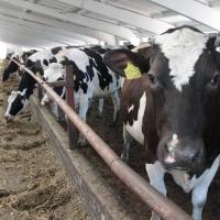 Омская область одна из лидеров Сибири по производству молока