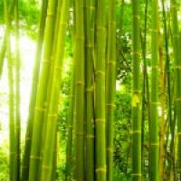 Особенности производства одеял из бамбука
