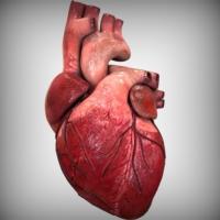Сердечные заболевания для мужчин опаснее, чем для женщин