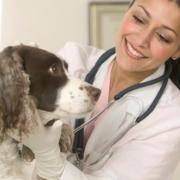 Чем занимаются ветеринарные клиники