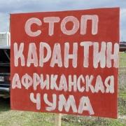 В Омске могут ввести карантин по африканской чуме