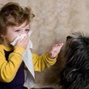 Основные принципы терапии аллергических заболеваний и гипоаллергенные собаки