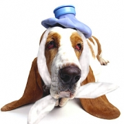 Выбор ветеринарной клиники