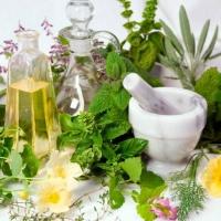 Что нужно знать о лекарственных растениях?
