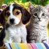 Зоотерапия или как нас лечат животные?