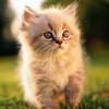 Как получить в подарок котенка