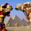 Покупка тура в Египет зимой