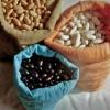 Семена - задел на будущий урожай